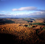 Aerial Image: Forest of Dean in Autumn, England, UK